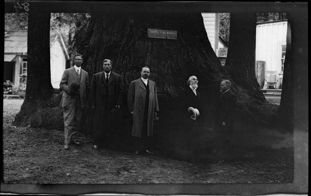 6j - 1911, June 24 - Santa Cruz, CA, Grove Of Tall Trees (3) 1024x647