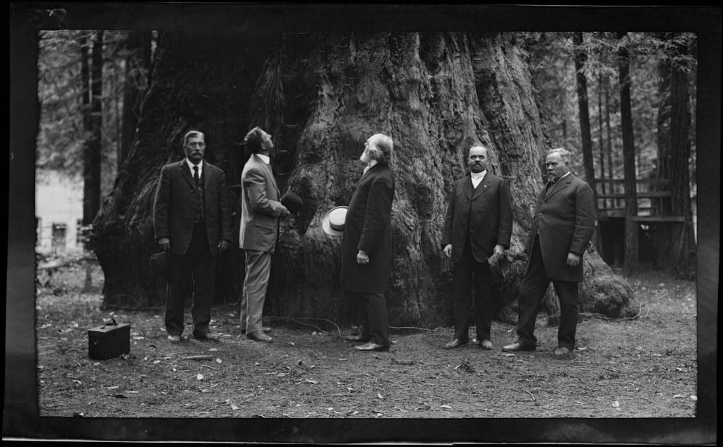 I35 - 1911, June 24 - Santa Cruz, CA, Grove Of Tall Trees 1024x633
