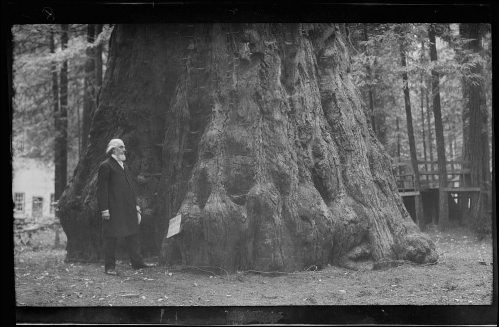I36 - 1911, June 24 - Santa Cruz, CA, Grove Of Tall Trees 1024x670